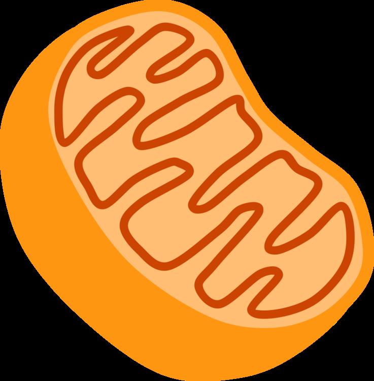 Food,Orange,Line