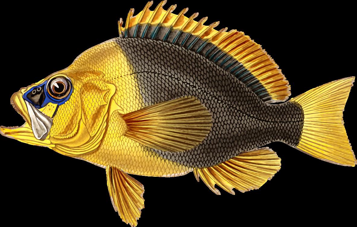 Perch,Tilapia,Marine Biology