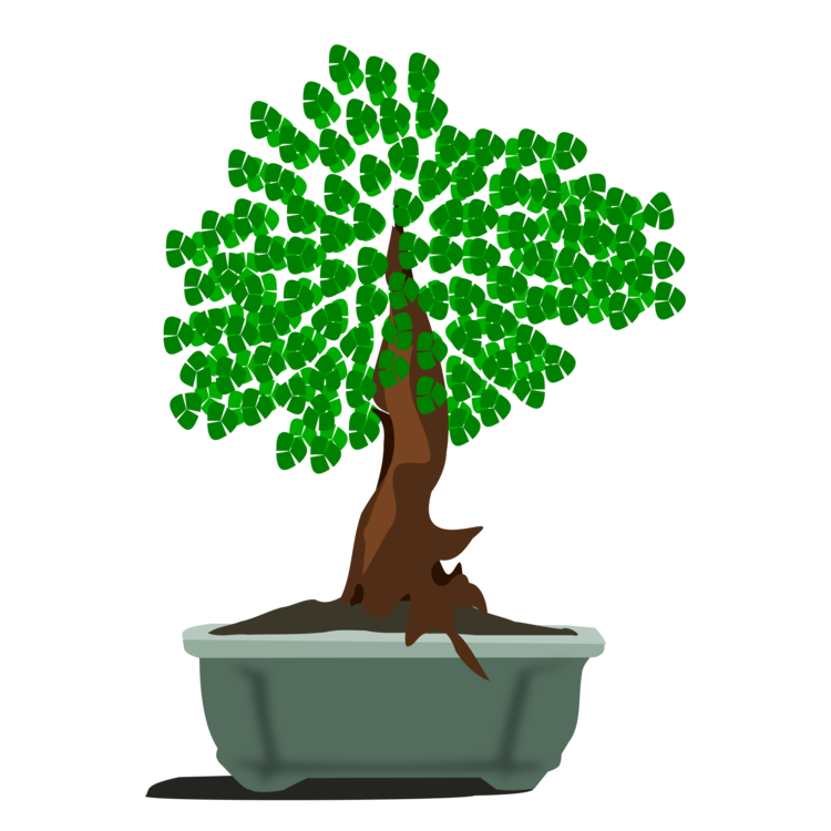 Plant,Houseplant,Flowerpot