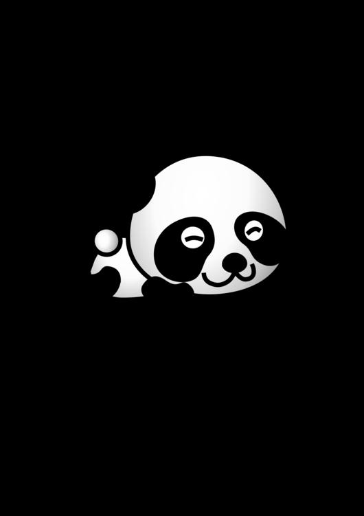 Giant Panda,Bear,Snout