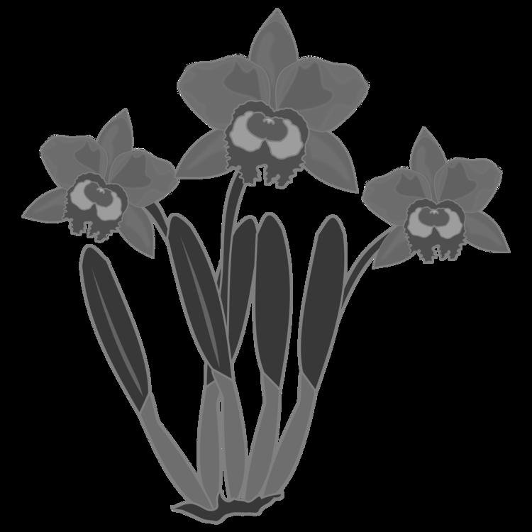 Plant,Flora,Monochrome Photography