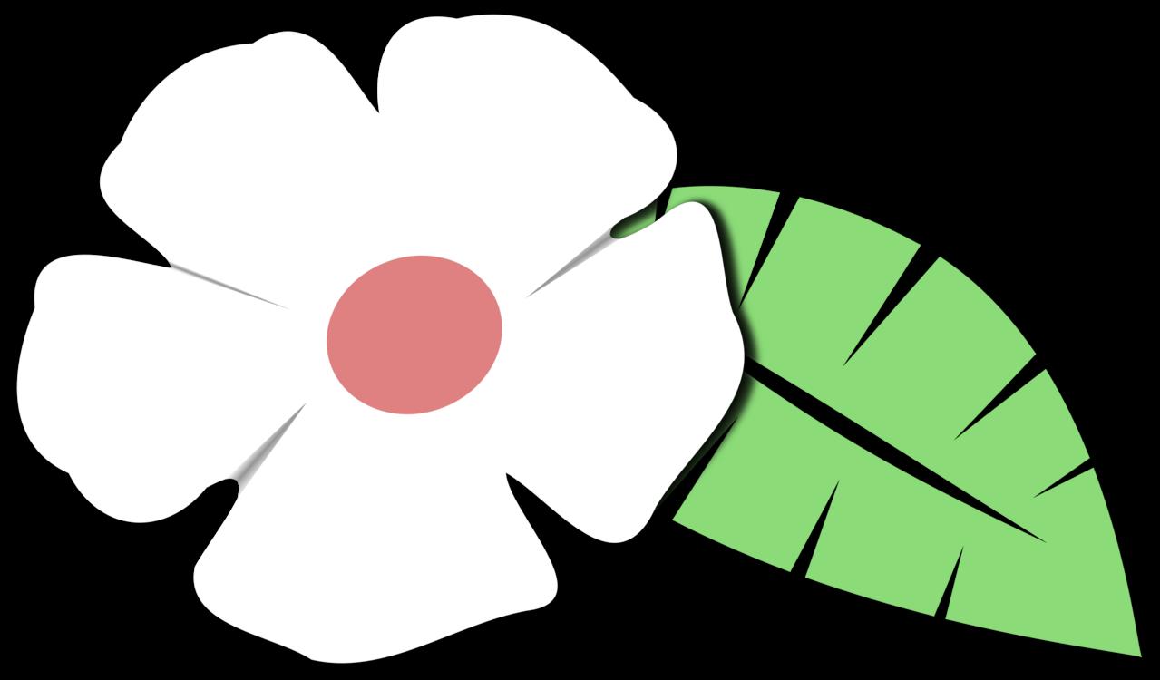 Petal,Plant,Flowering Plant