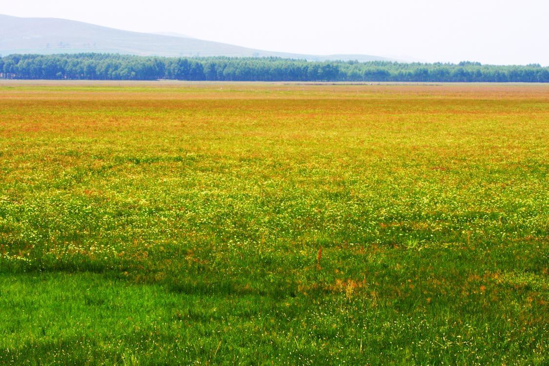 Meadow,Crop,Prairie