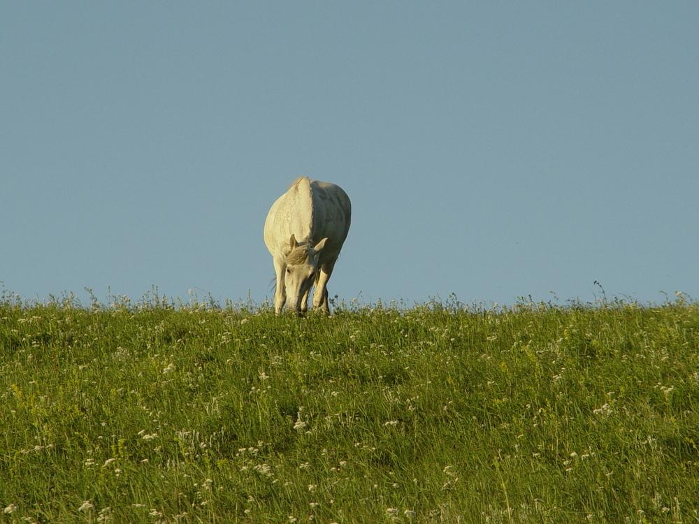 Biome,Wildlife,Cattle Like Mammal