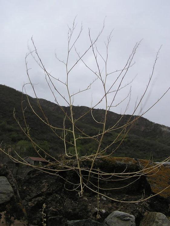 Plant,Flora,Tree