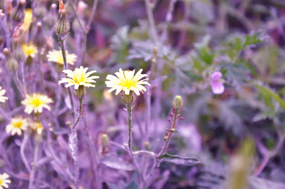 Plant,Flora,Purple