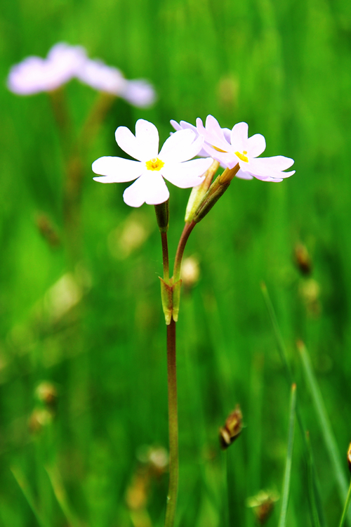 Plant,Flora,Meadow