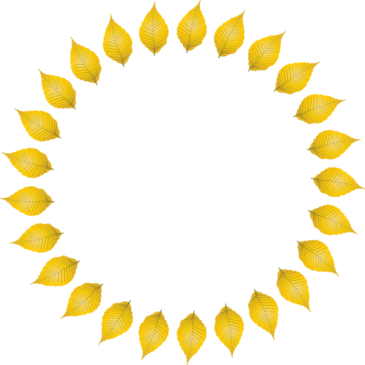 Leaf,Symmetry,Petal