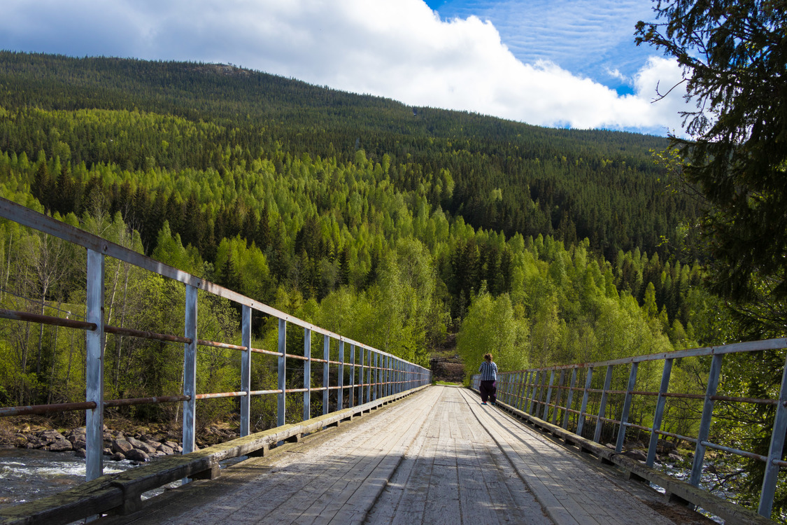 Tree Information Bridge CC0-lisenssi
