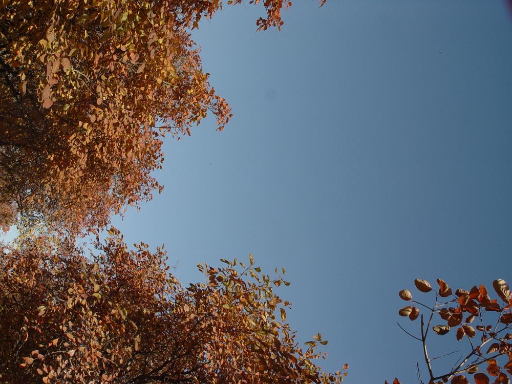 Computer Wallpaper,Leaf,Nature