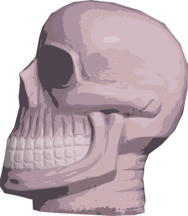 Head,Skeleton,Skull