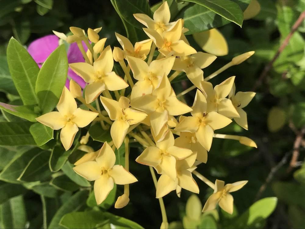 Flowering plant Plants