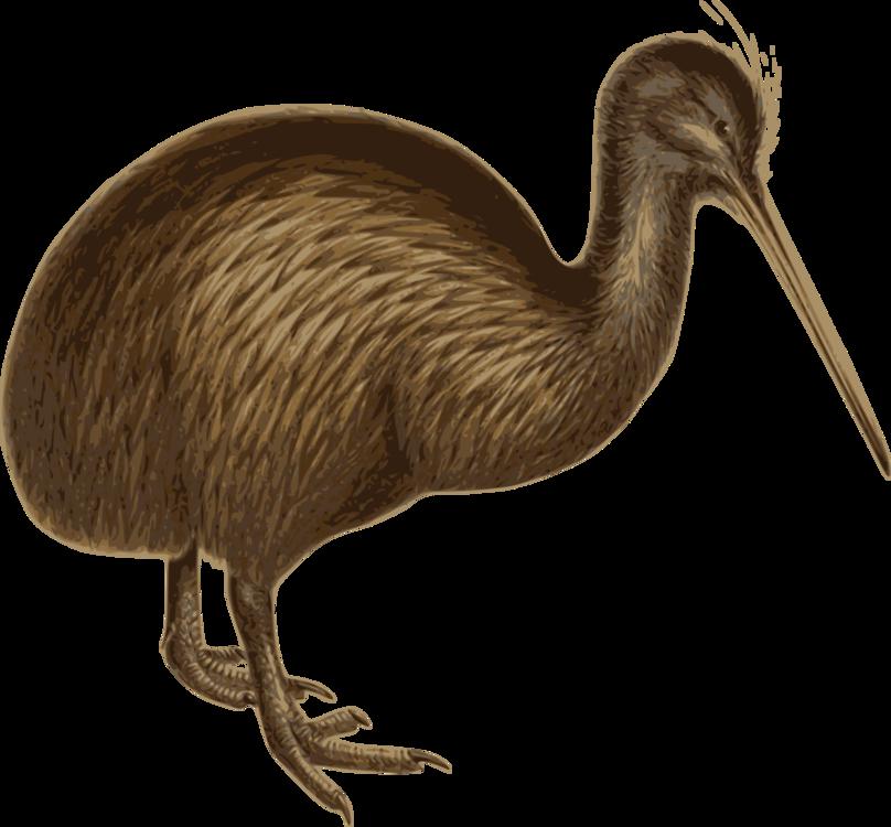 Flightless Bird,Ratite,Ostrich