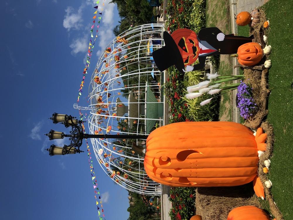 Tourism Tourist attraction Tree Amusement park Fair-M iroda