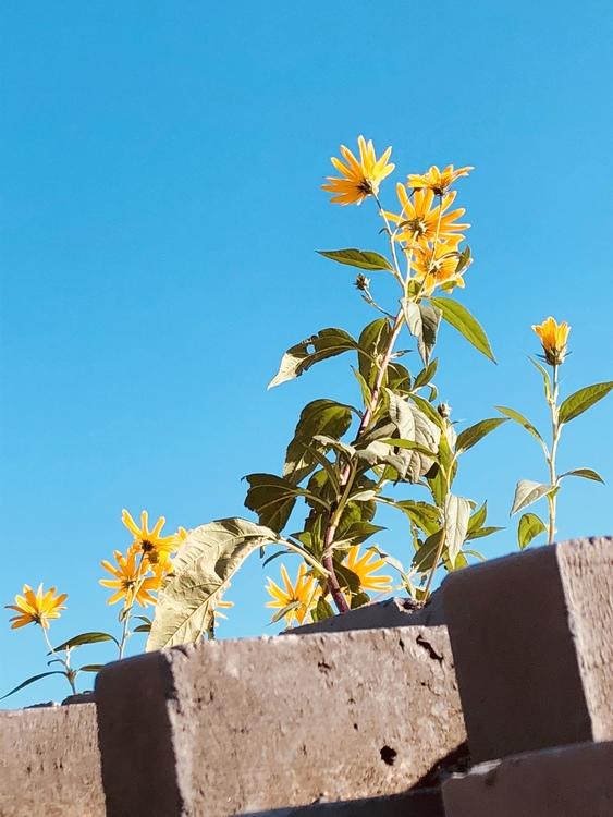 Sunflower Flora Spring Framework Sky Limited