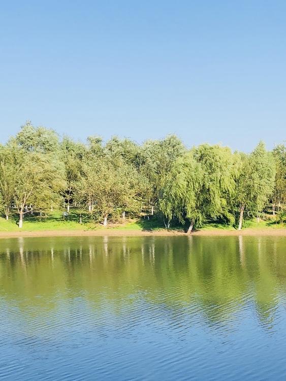 Meadow,Reservoir,Lacustrine Plain
