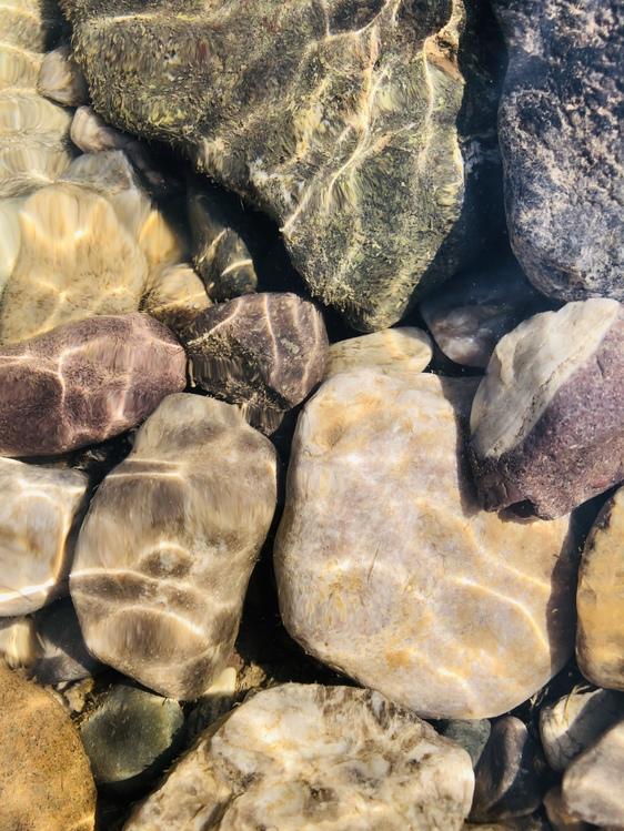 Boulder,Igneous Rock,Plant
