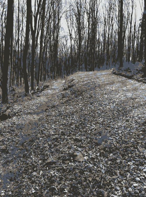 Biome,Plant,Road