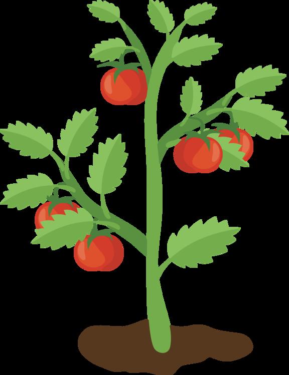 Tomato,Alpine Strawberry,Plant