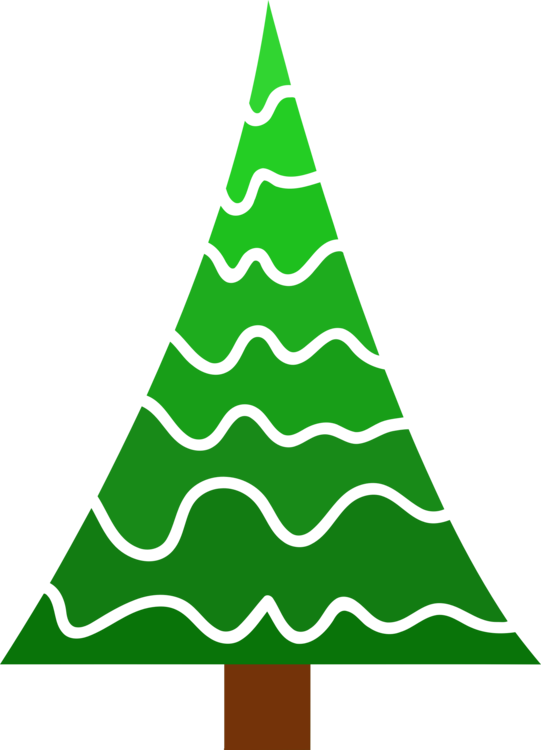 Evergreen,Pine Family,Colorado Spruce