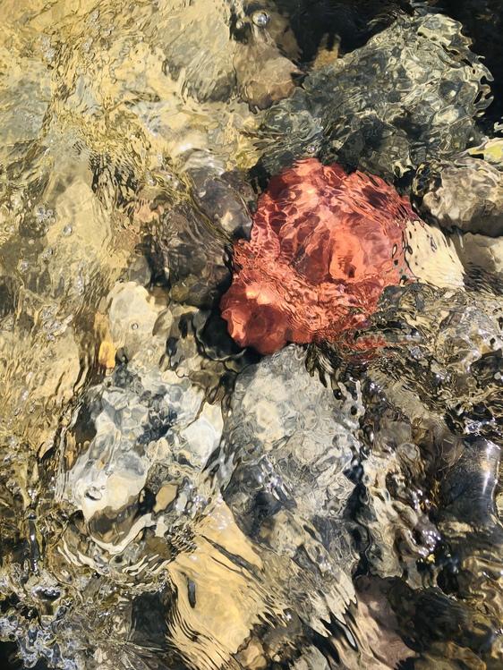 Igneous Rock,Volcanic Rock,Art