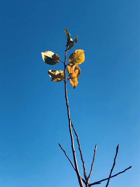 Plant,Flower,Pedicel