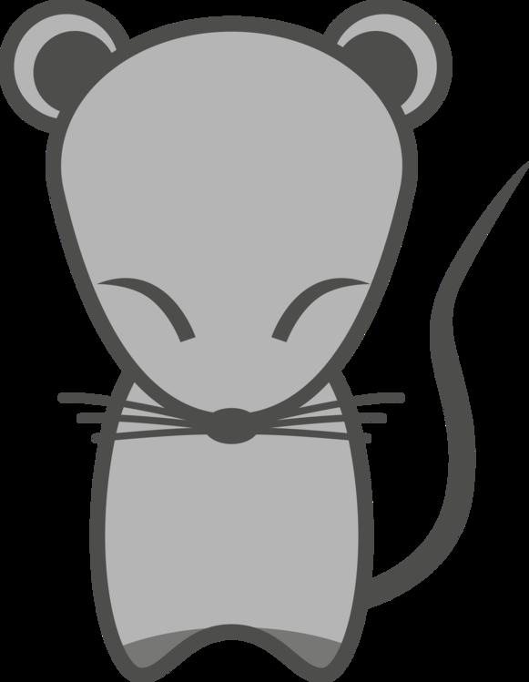 Head,Whiskers,Muridae