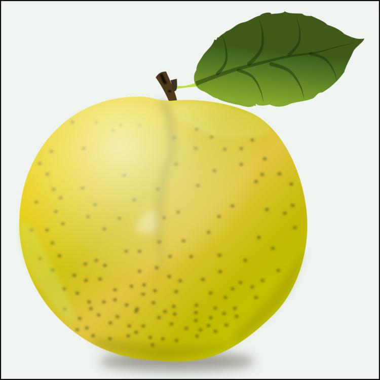 Leaf,European Plum,Grapefruit