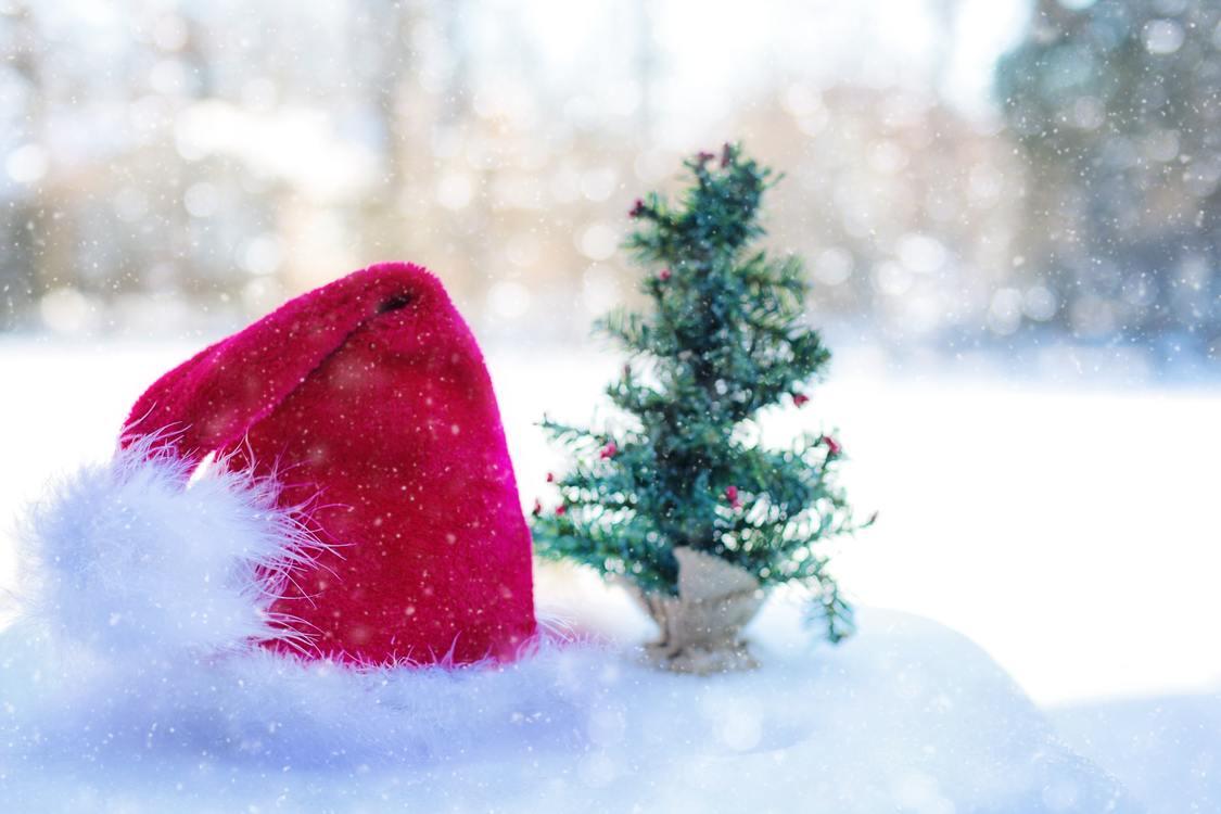 Pink,Fir,Christmas Decoration
