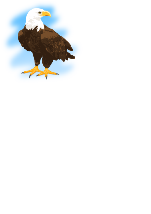Bald Eagle,Accipitridae,Falconiformes