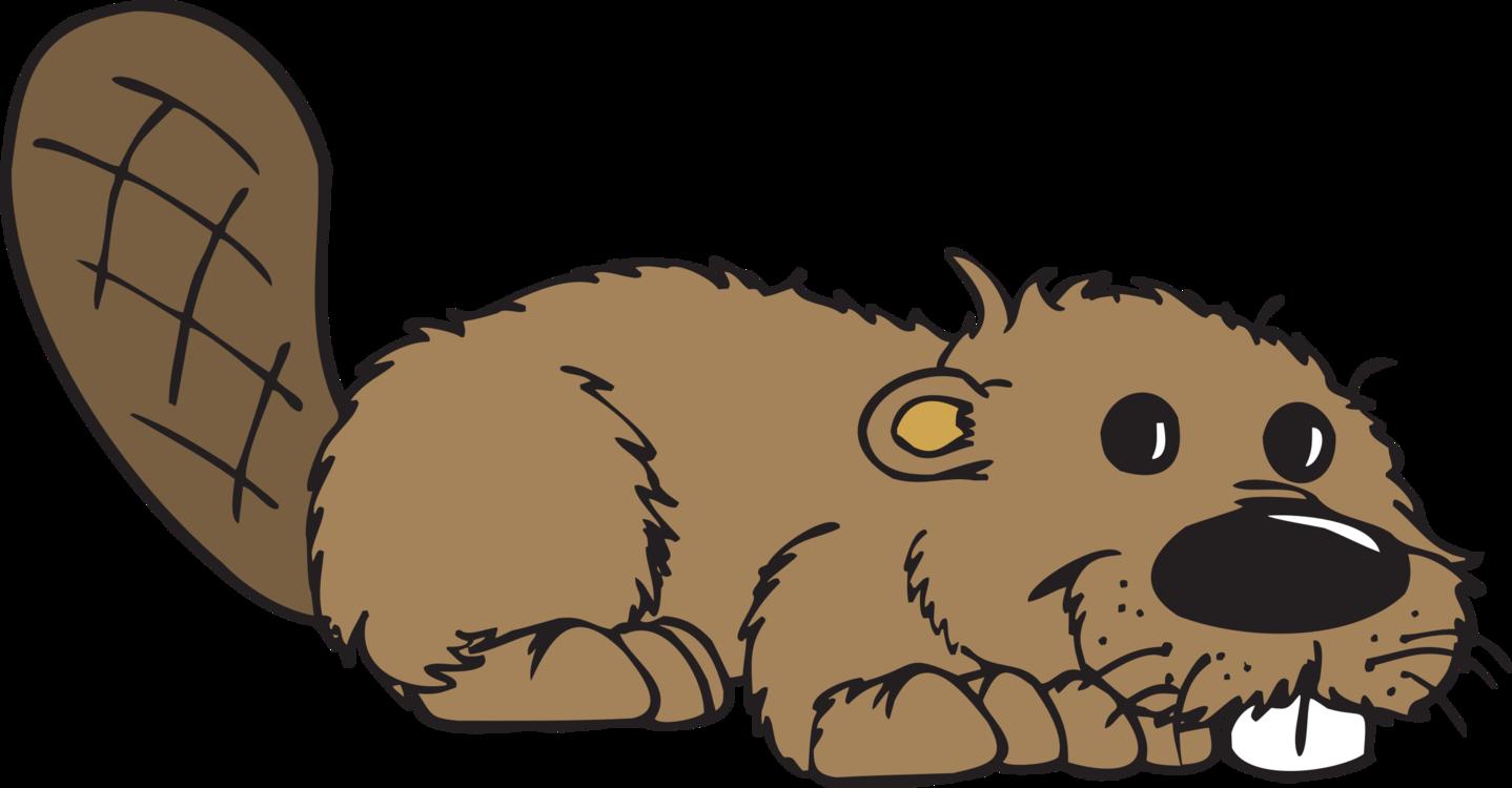 Snout,Beaver,Groundhog