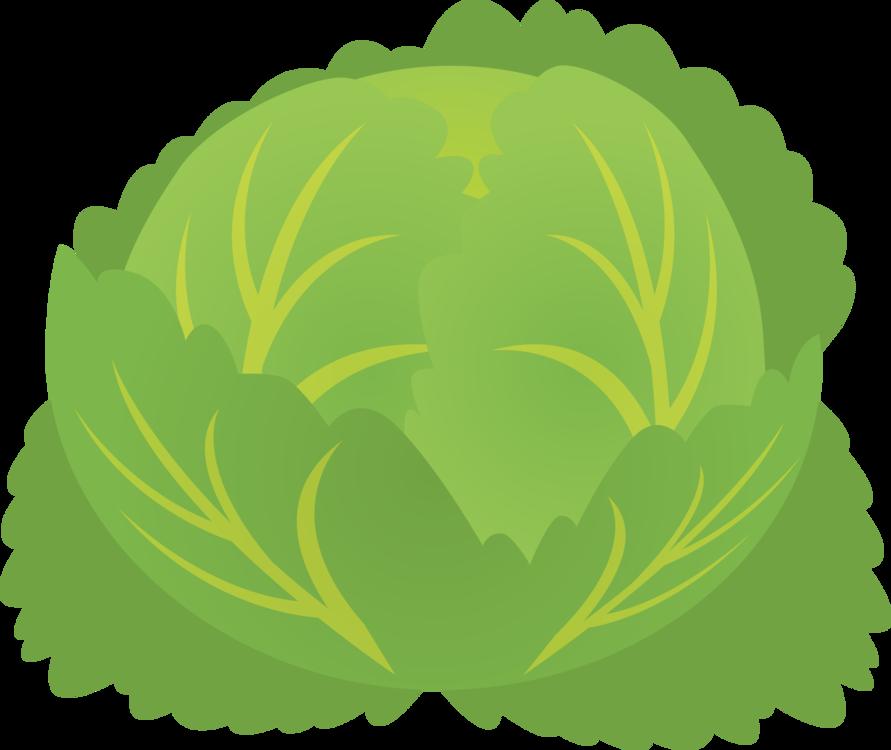 Plant,Leaf,Lettuce
