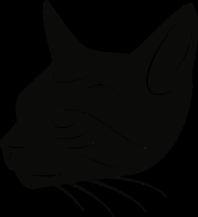 Black Cat,Carnivore,Felidae