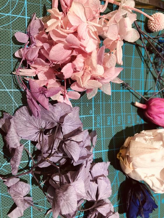 Pink,Flower,Leaf