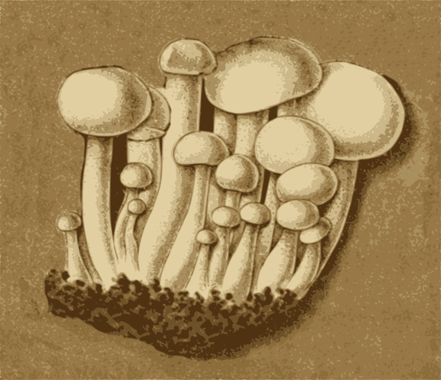 Mushroom,Agaric,Edible Mushroom