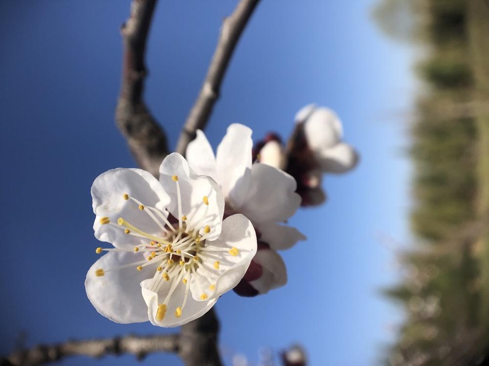 Pollen,Plant,Flower