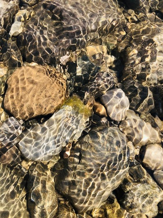 Turtle,Hawksbill Sea Turtle,Tortoise