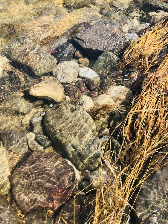 Igneous Rock,Plant,Geology
