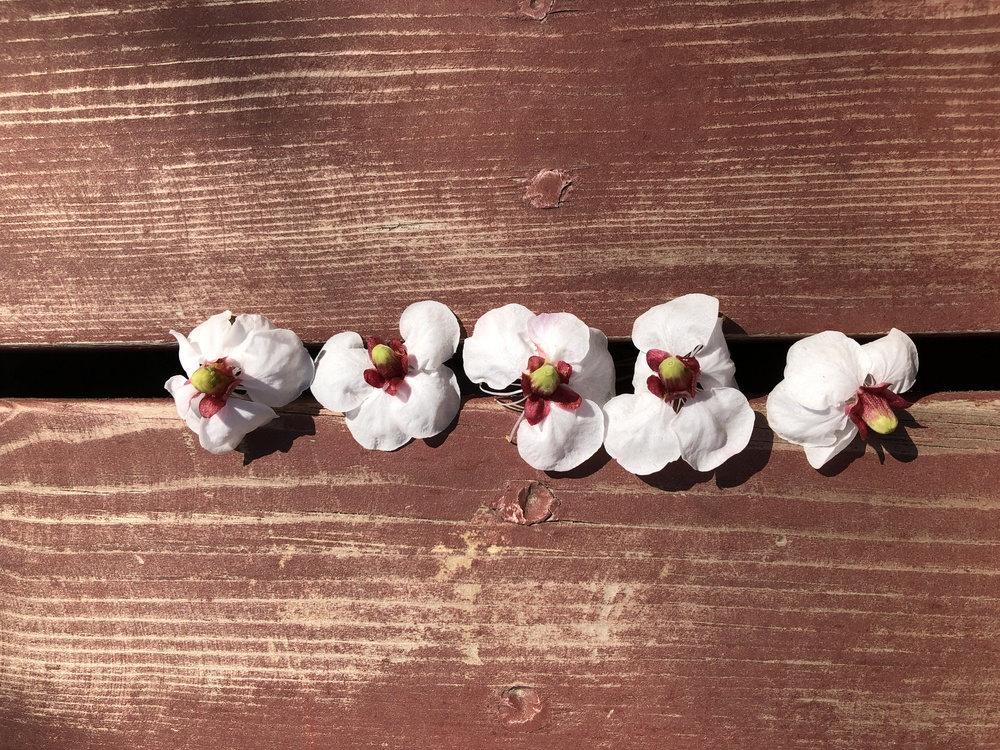 Plant,Flower,Moth Orchid