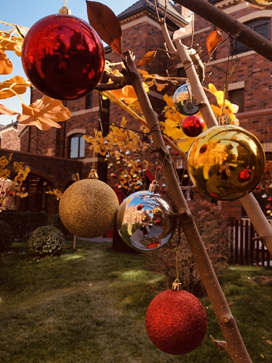 Sphere,Plant,Tree