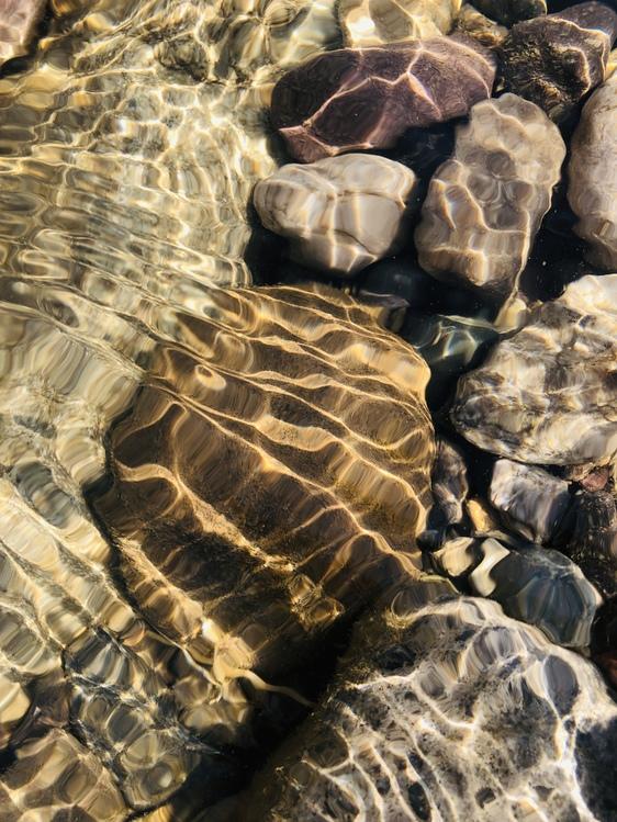 Wildlife,Leaf,Tortoise