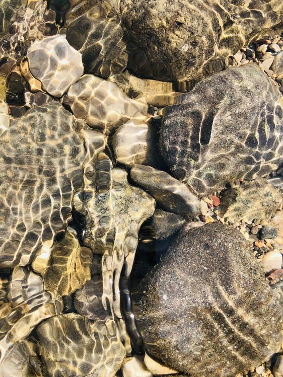 Turtle,Wildlife,Tortoise