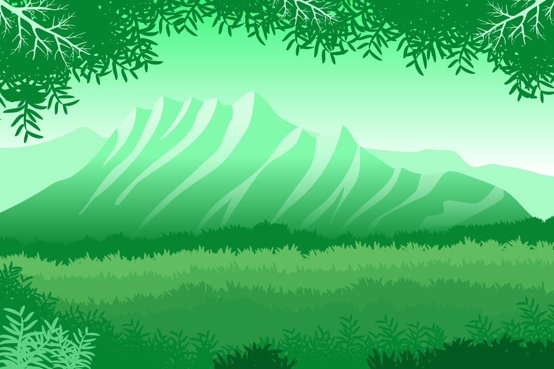 Fir,Evergreen,Plant