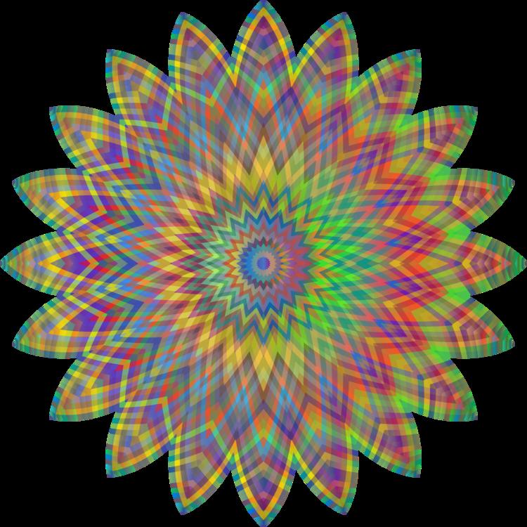 Plant,Flower,Symmetry