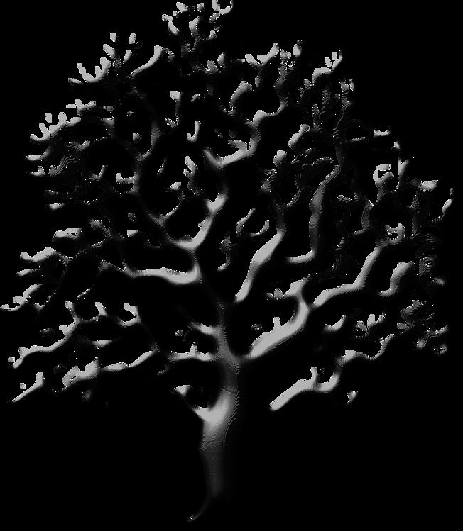 Botany,Plant,Leaf