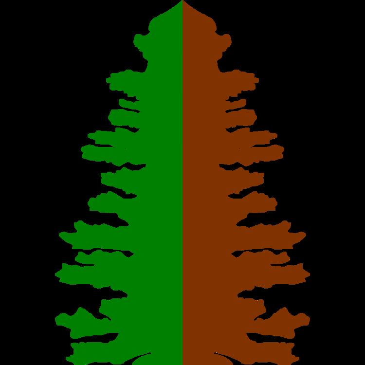 Pine Family,Colorado Spruce,Leaf