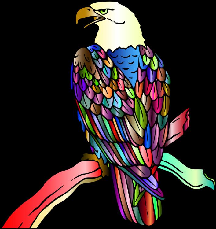 Eagle,Falconiformes,Kite