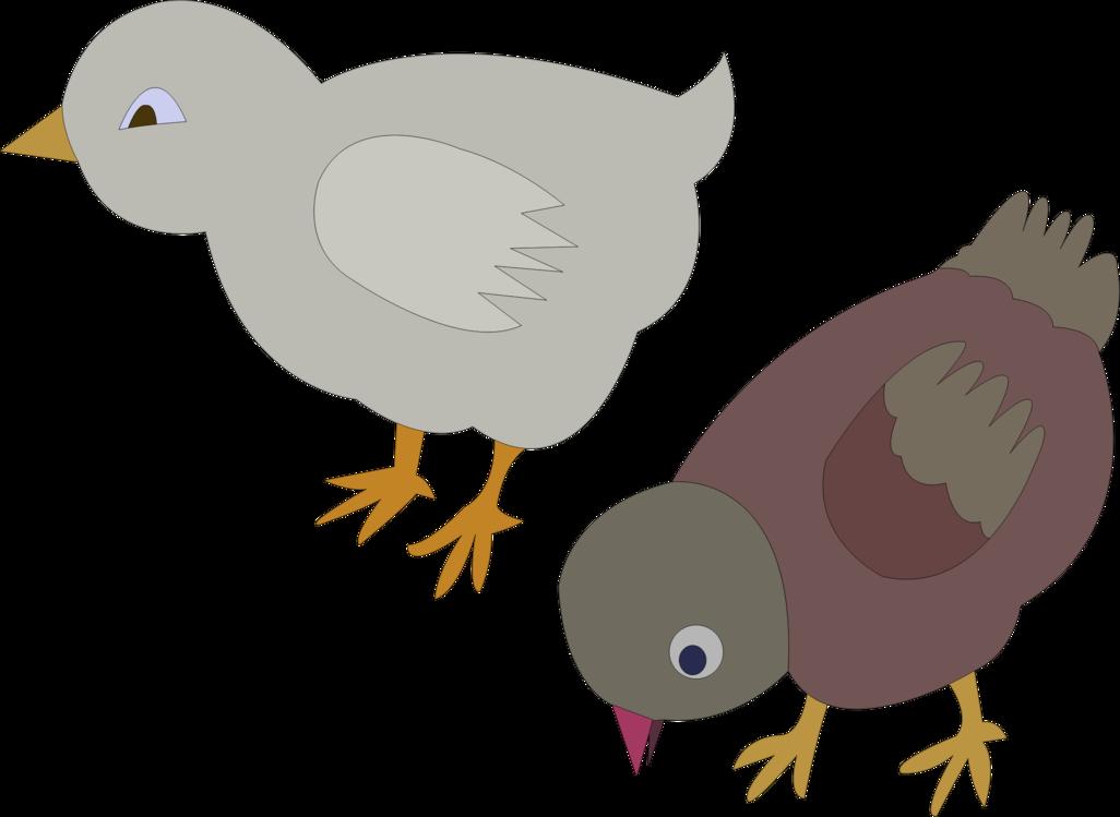 Bird,Pigeons And Doves,Beak
