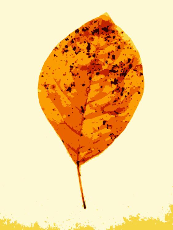 Orange,Plant,Leaf