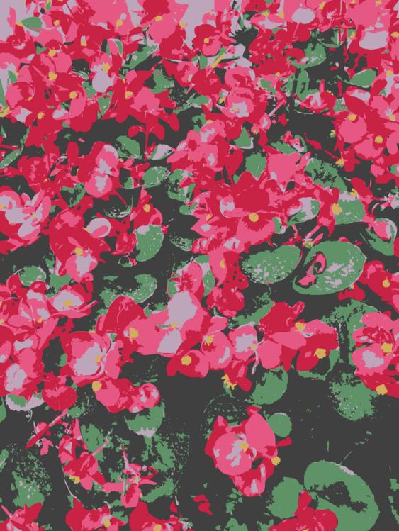Pink,Plant,Flower